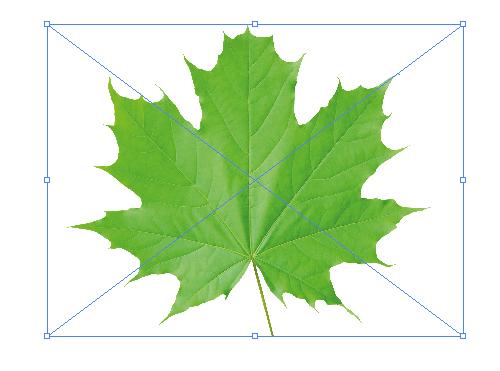 How to Draw a Fall Leaf Using Adobe Illustrator