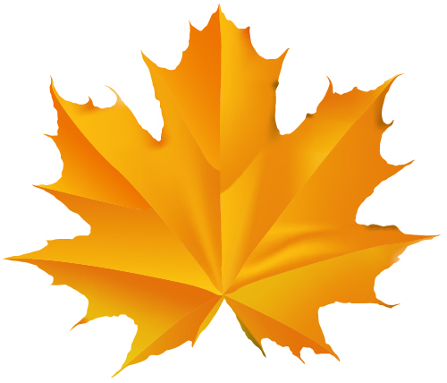 how to draw a maple leaf in illustrator
