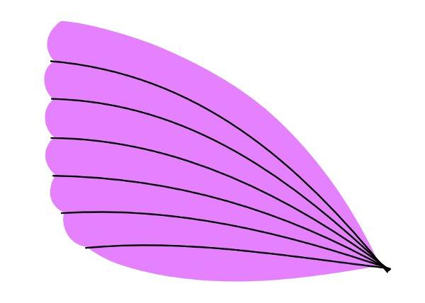 butterfly27