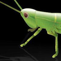 200grasshopper