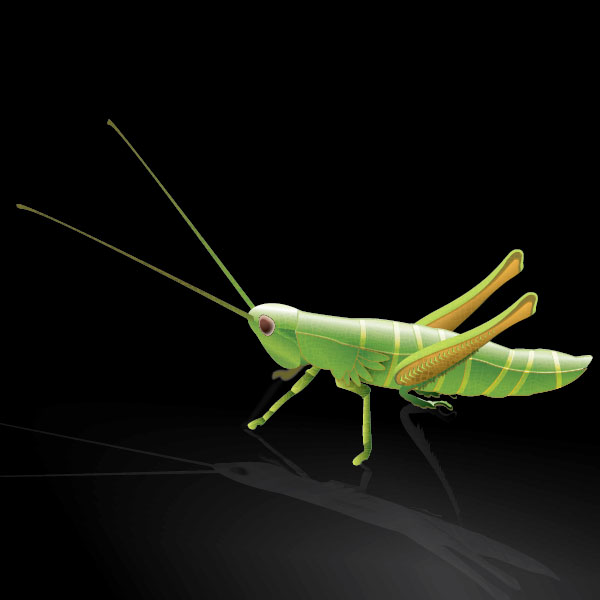 How to Create a Stylized Vector Grasshopper