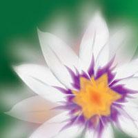 Flower200