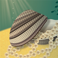 Preview for Create an Illustration of a Pearl-Filled Clam on an Ocean Bed
