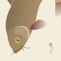 Preview for Create a Traditional Japanese Koi Carp Illustration